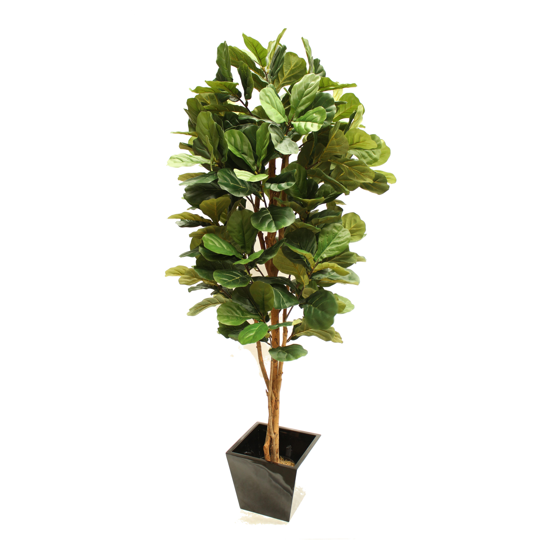 Large plants complete with fibreglass decor pot.